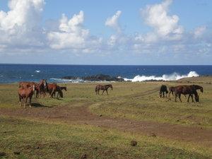 3780523-wild-horses-0