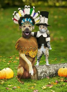Thanksgiving dog and cat